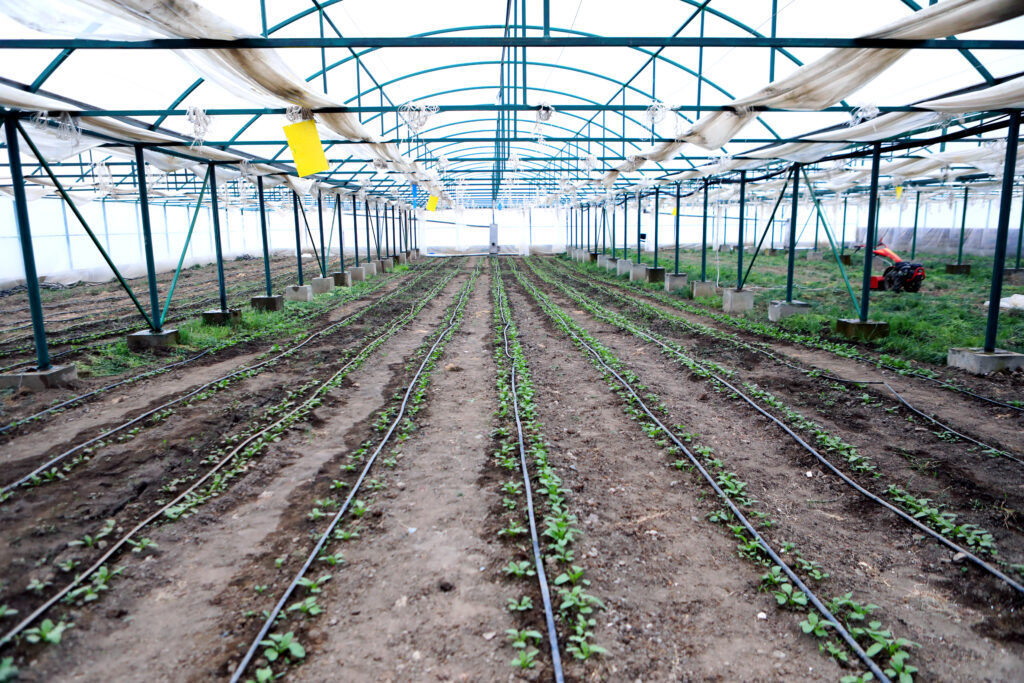biogas in armenia 40615662663 o
